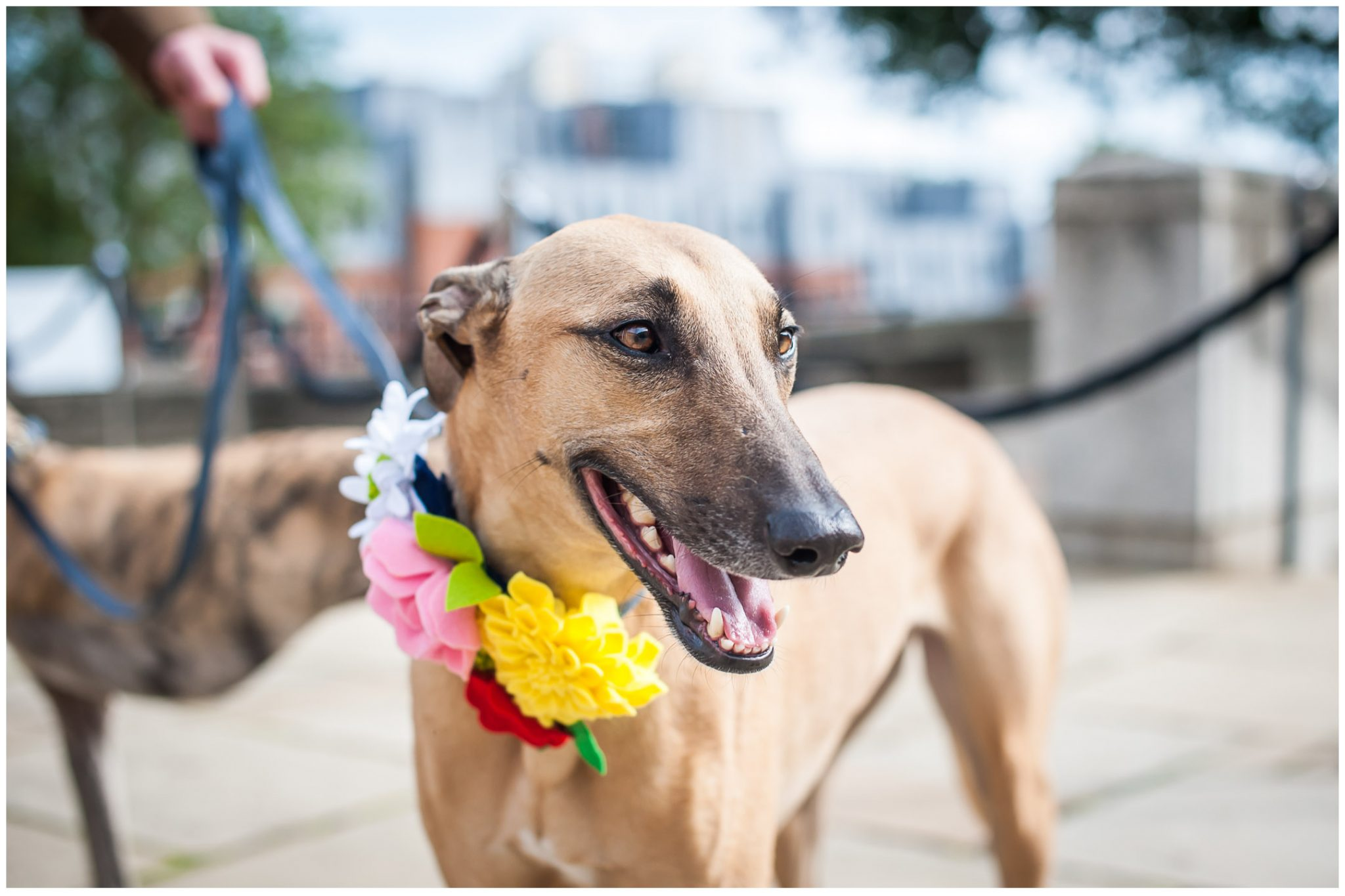 Winchester Great Hall wedding photography dog portrait