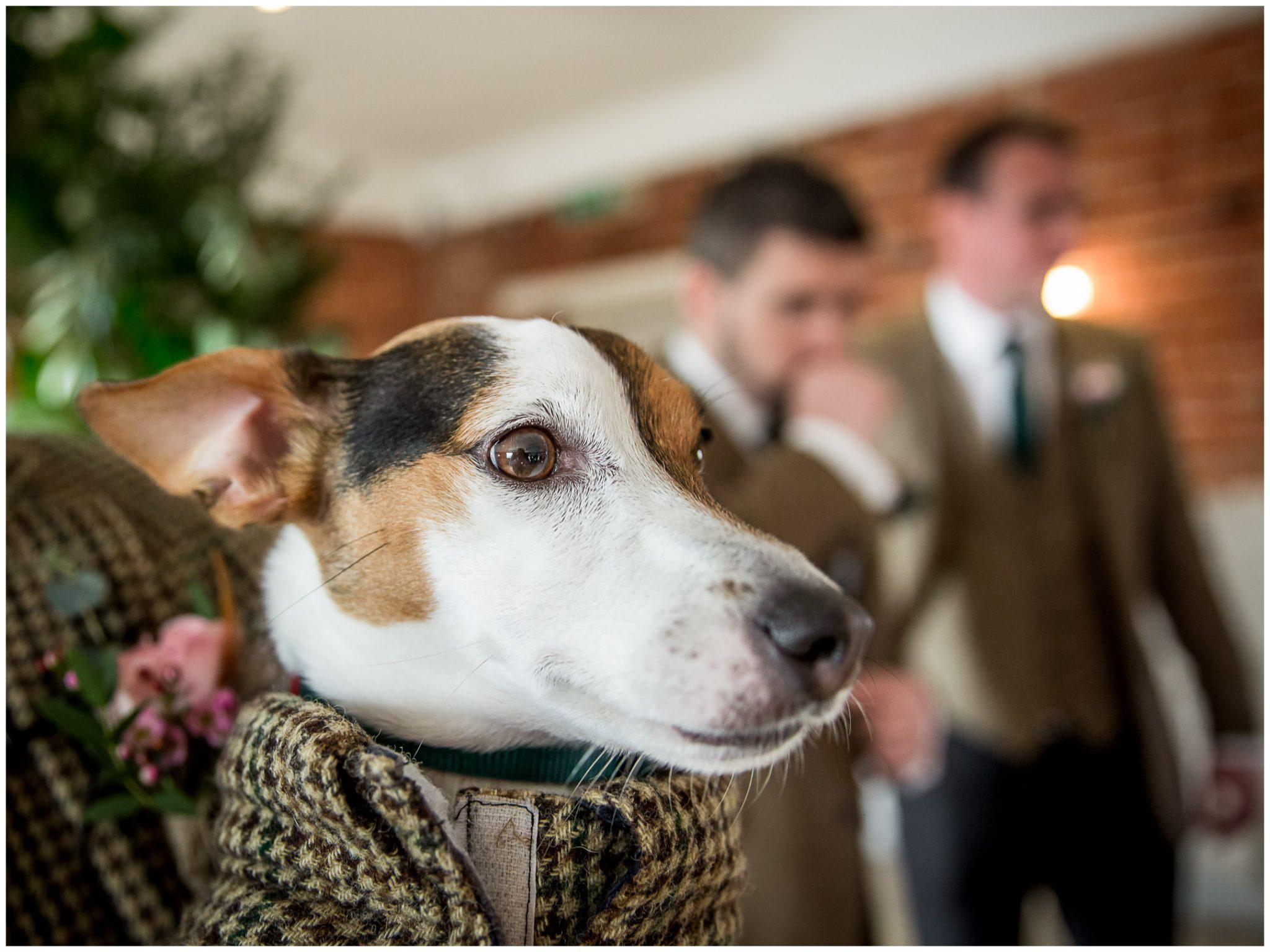The couple's dog waiting for the bride's arrival